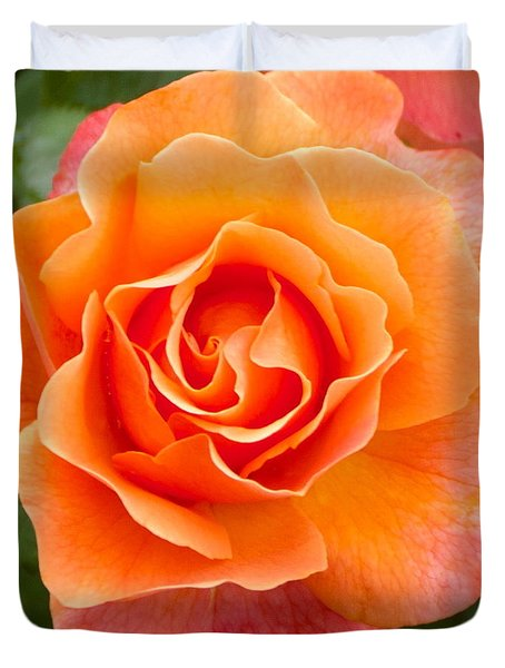 Orange Rose Lillian Duvet Cover by Dee Dee  Whittle