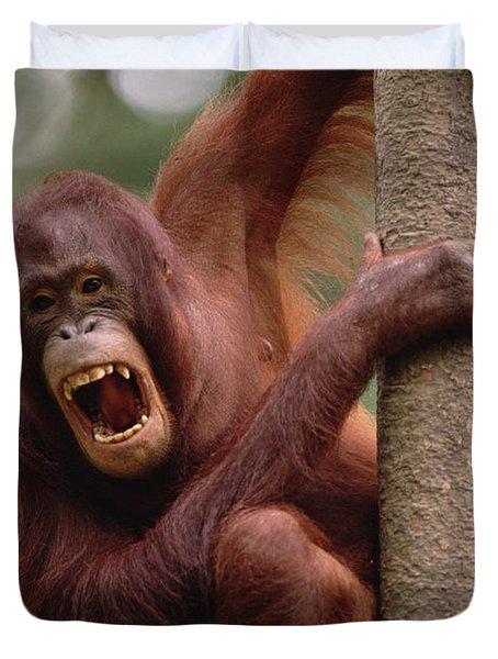 Orangutan Hanging On Tree Duvet Cover by Gerry Ellis