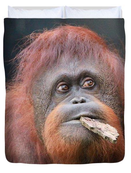 Orangutan Portrait Duvet Cover by Dan Sproul