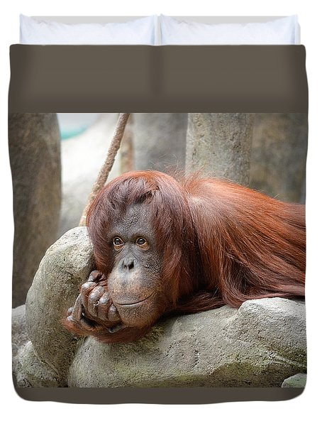 Orangutans Day Duvet Cover