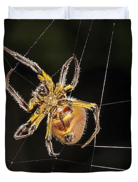 Orb-weaver Spider In Web Panguana Duvet Cover