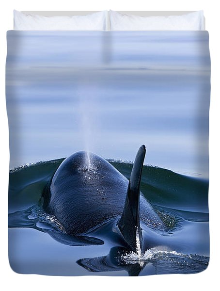 Orca Whale Surfaces In Lynn Canal Duvet Cover by John Hyde