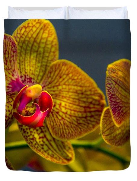 Orchid Color Duvet Cover