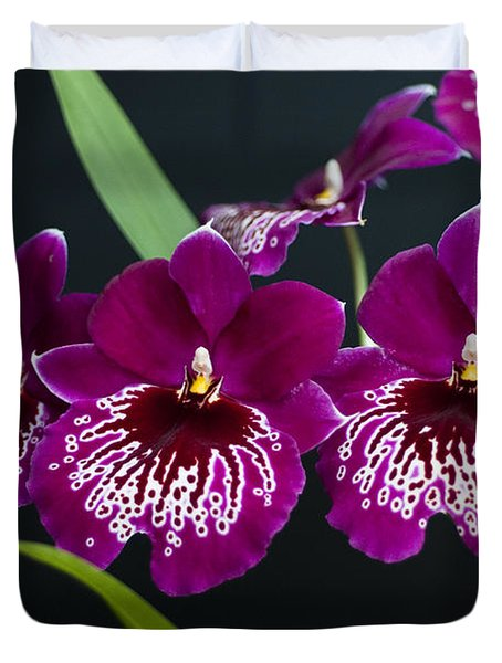 Duvet Cover featuring the photograph Orchid Miltonia by Lana Enderle