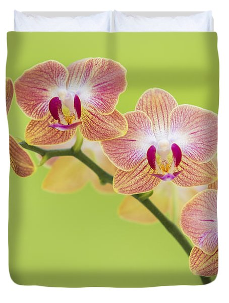 Orchids Duvet Cover by Diane Diederich