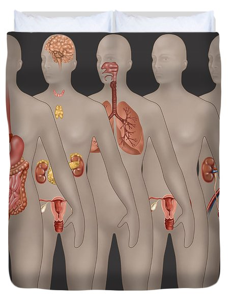Organ Systems In Female Anatomy Duvet Cover