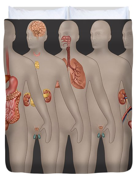 Organ Systems In Male Anatomy Duvet Cover
