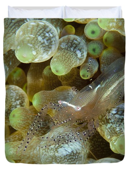 Ornate Anemone Shrimp In Anemone Duvet Cover by Steve Jones