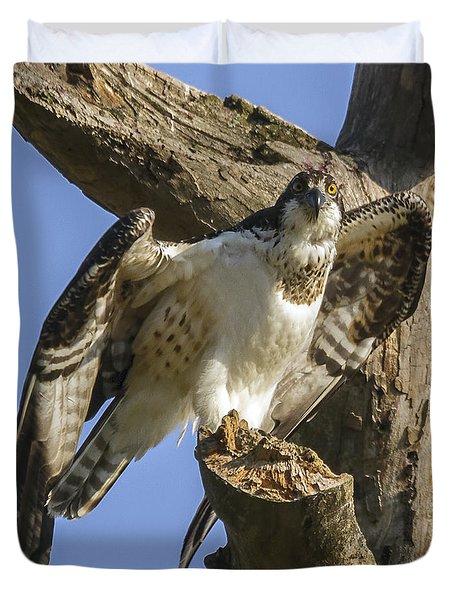 Osprey Pose Duvet Cover by David Lester