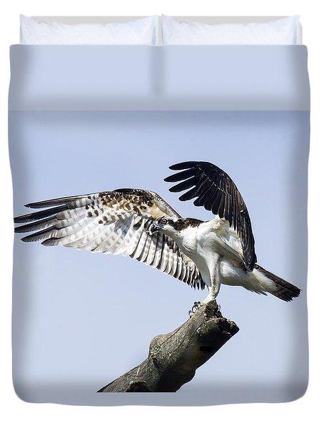 Osprey Pride 2 Duvet Cover by David Lester