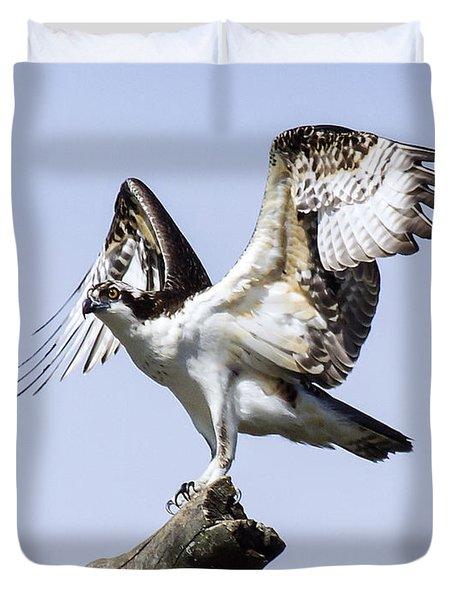 Osprey Pride 6 Duvet Cover by David Lester