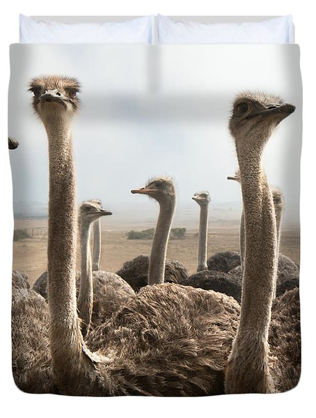 Ostrich Heads Duvet Cover
