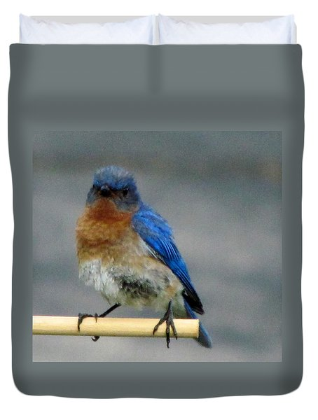 Our Own Mad Bluebird Duvet Cover by Betty Pieper