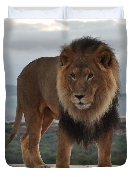 Out Of Africa Lion 3 Duvet Cover