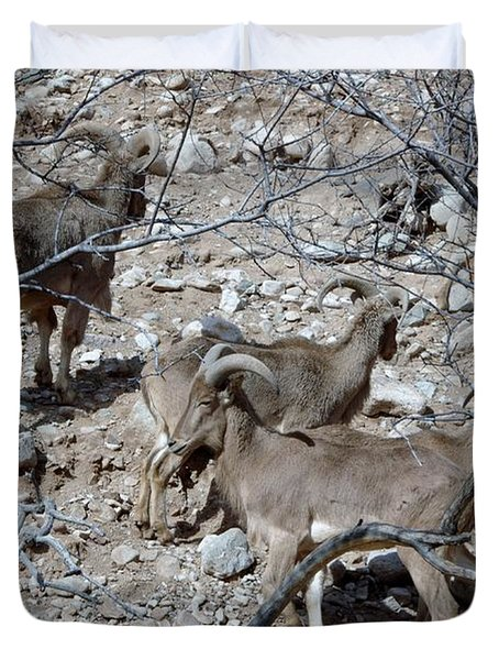 Out Of Africa  Mountain Goats Duvet Cover