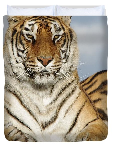 Out Of Africa Tiger 4 Duvet Cover