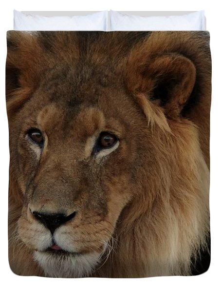 Out Ofafrica  Lion 4 Duvet Cover