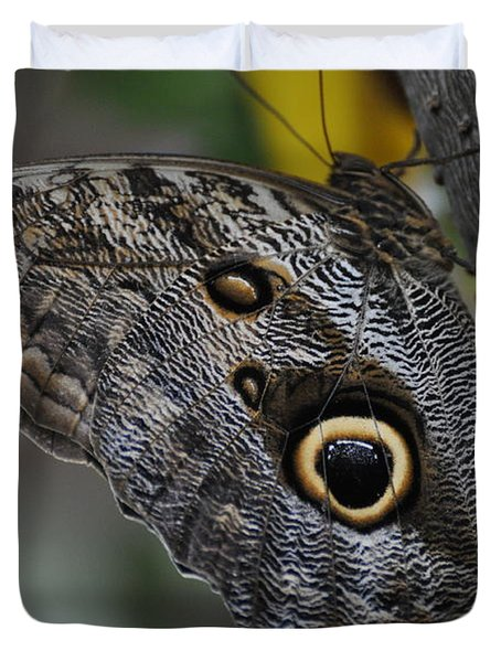 Duvet Cover featuring the photograph Owl Butterfly by Bianca Nadeau