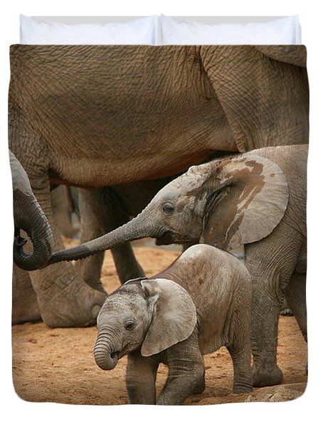 Pachyderm Pals Duvet Cover by Bruce J Robinson