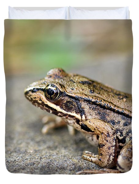 Pacific Tree Frog On A Rock Duvet Cover by David Gn