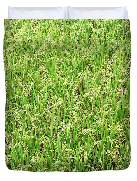 Paddy Field Duvet Cover by Yew Kwang