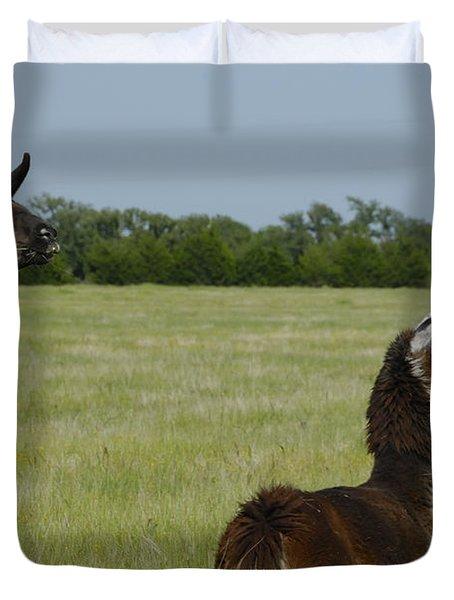 Pair Of Alpacas Duvet Cover by Charles Beeler