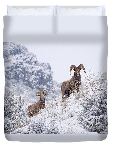 Pair Of Winter Rams Duvet Cover by Mike  Dawson