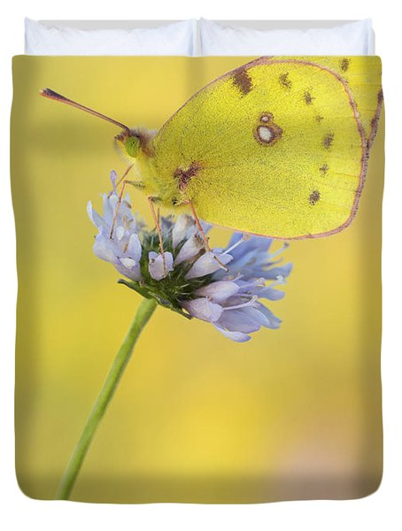Pale Clouded Yellow Butterfly On Flower Duvet Cover