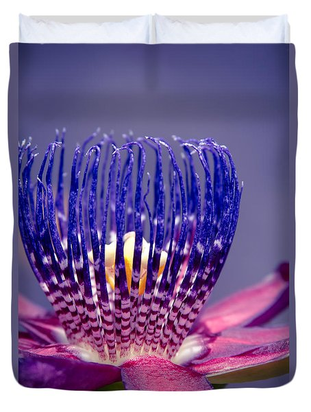 Passiflora Alata - Ruby Star - Ouvaca - Fragrant Granadilla -  Winged-stem Passion Flower Duvet Cover