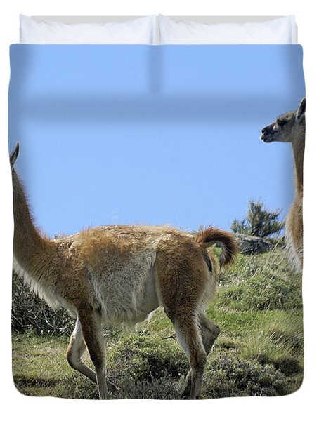 Patagonian Guanacos Duvet Cover by Michele Burgess