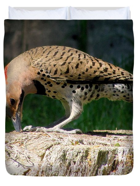 Pecking Flicker Duvet Cover by Lori Pessin Lafargue
