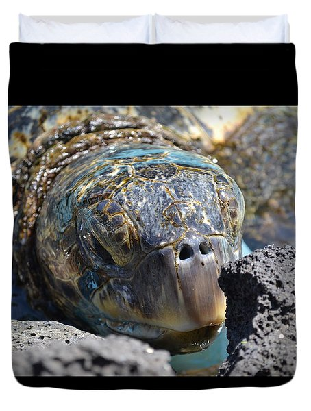 Peek-a-boo Turtle Duvet Cover