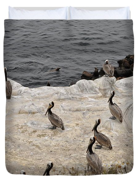 Pelicans Seals N Daisies  Duvet Cover