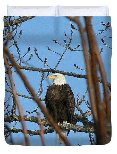 Perched American Bald Eagle  Duvet Cover by Neal Eslinger