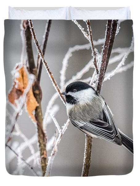 Perched Black Capped Chickadee Duvet Cover