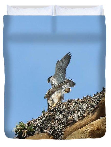 Peregrine Falcons - 3 Duvet Cover