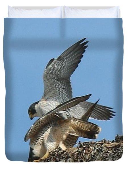 Peregrine Falcons - 4 Duvet Cover