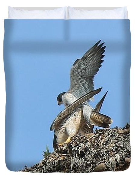 Peregrine Falcons - 5 Duvet Cover