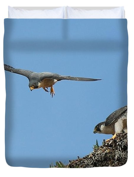 Peregrine Falcons - 6  Duvet Cover