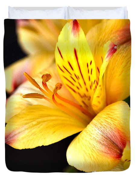 Peruvian Lily Duvet Cover by Deb Halloran