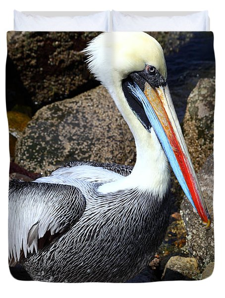 Peruvian Pelican Duvet Cover