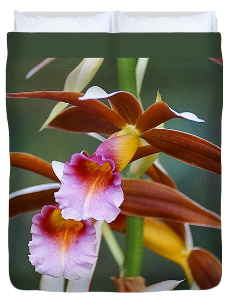 Duvet Cover featuring the photograph Phaius Tankervilliae Orchid by Blair Wainman