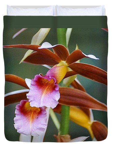 Phaius Tankervilliae Orchid Duvet Cover