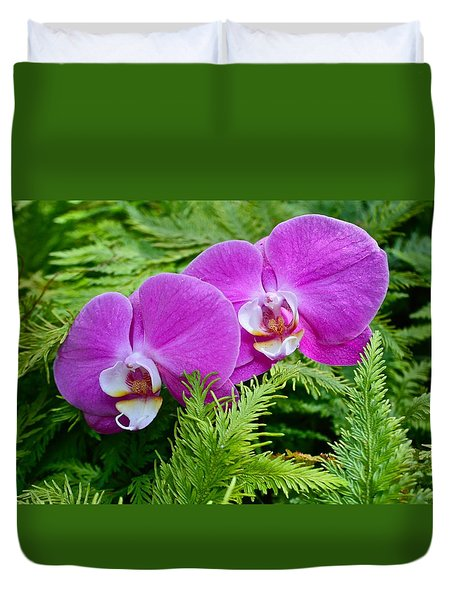 Phalaenopsis Moth Orchids Duvet Cover by Venetia Featherstone-Witty
