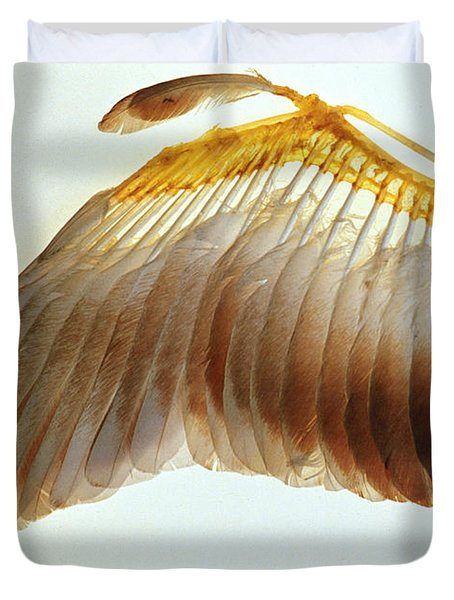 Pigeon Wing Duvet Cover by Biophoto Associates