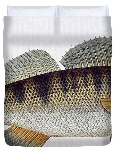 Pike Perch Duvet Cover by Andreas Ludwig Kruger