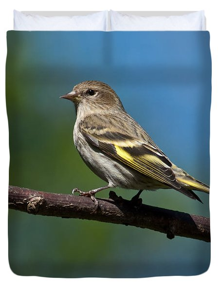 Pine Siskin Perched On A Branch Duvet Cover