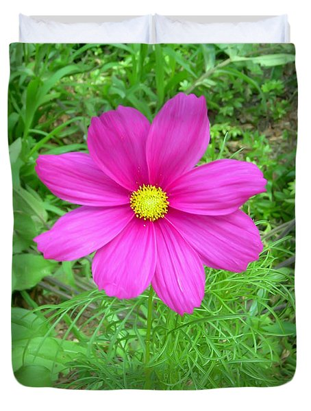 Pink Cosmos Duvet Cover by Aimee L Maher Photography and Art Visit ALMGallerydotcom