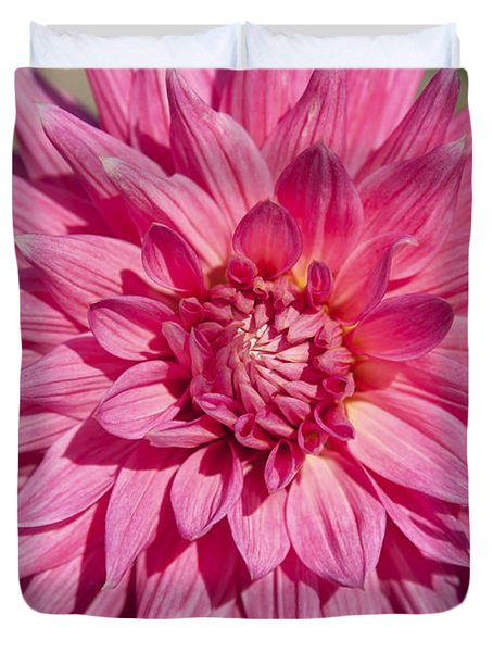 Pink Dahlia II Duvet Cover by Peter French