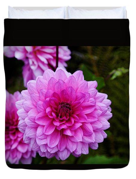 Pink Dahlias Duvet Cover
